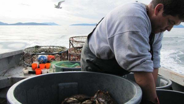 Tribal treaty fishing rights give Washington tribes the opportunity to weigh in on, and even block, projects that could impact their fishing grounds.