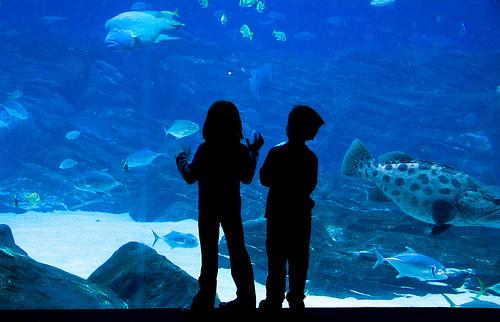 Aquarium Coming to Austin in November KUT