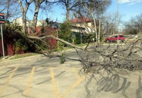 A downed tree in central East Austin.