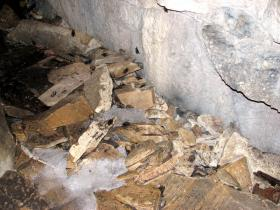 Dead bats litter the floor of a cave in Vermont. Some researchers believe bats in warmer climates could fare better when faced with white-nose syndrome.