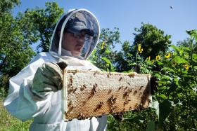 Anne Woods examines a frame of honey and bees.