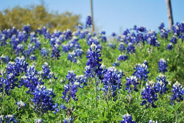 After a lush 2010, the wildflower outlook for 2011 is not as colorful.