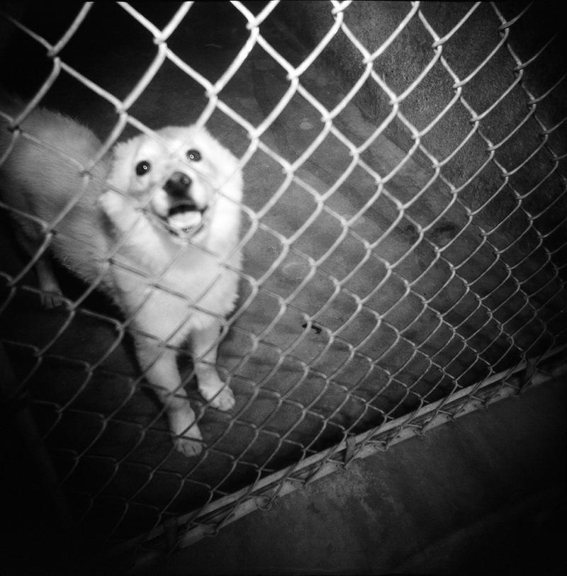 Dog at TLAC
