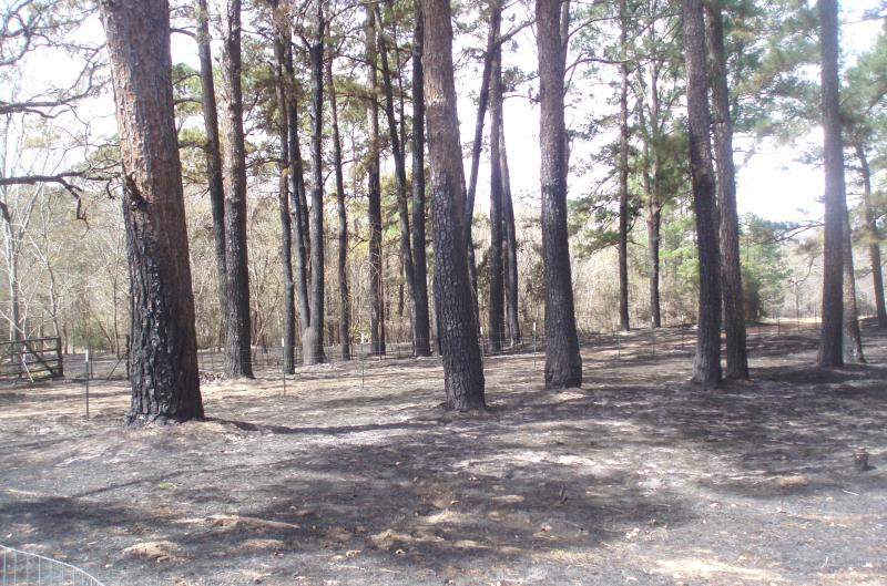 A burn ban remains in effect in Travis County and several Central Texas counties to guard against wildfires, like last year's burn in Bastrop County (pictured).