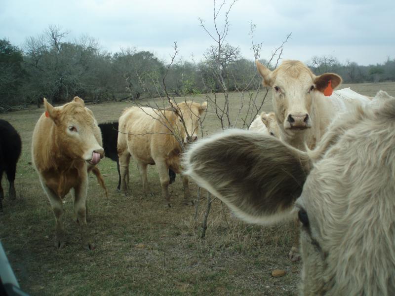 Japan Crisis Could Raise Texas Farm Product Prices