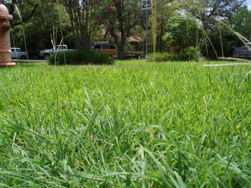 Lawns in San Marcos won't be looking like this much longer, as the city adopts Stage 1 Water Restrictions on car washing, swimming pools...and lawn watering.