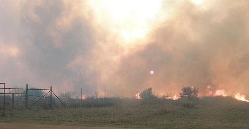Extreme fire is seen burning through thick fuel during the Highway 322 fire (Dimmit County) in March 2008.