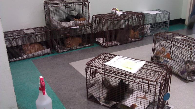 The Town Lake Animal Shelter has run out of space for cats. Officials say the shelter has seen an unusually high number of intakes.