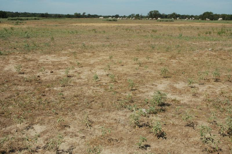 The drought has taken its toll on a Burleson County pasture.