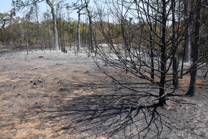 Burned trees and ground at Union Chapel Hill area on Hwy 21