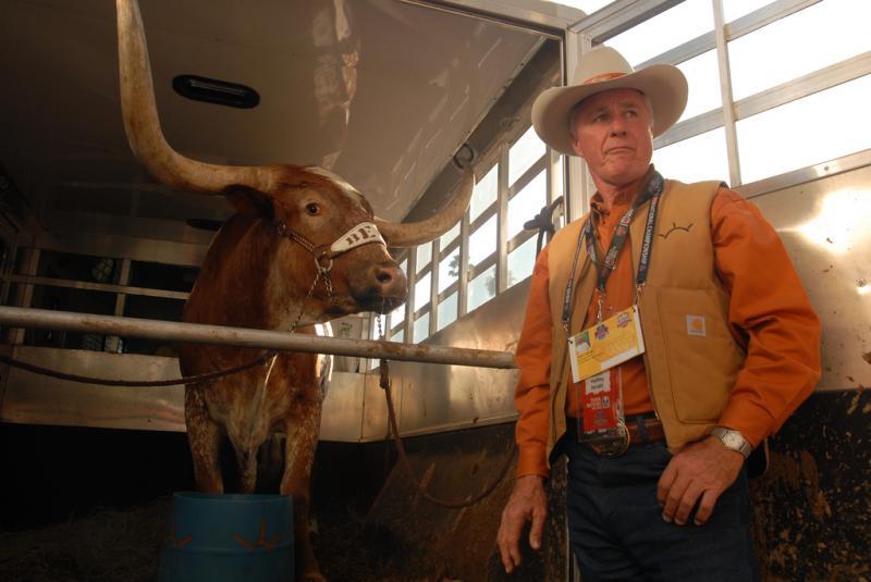 Longhorn cattle in Texas.