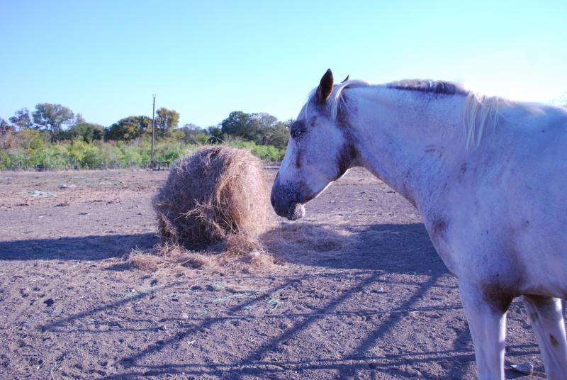 One of Stephanie Reed's horses in Dale, Texas