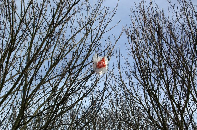Austin's plastic bag ban limits retailers from providing single-use bags.