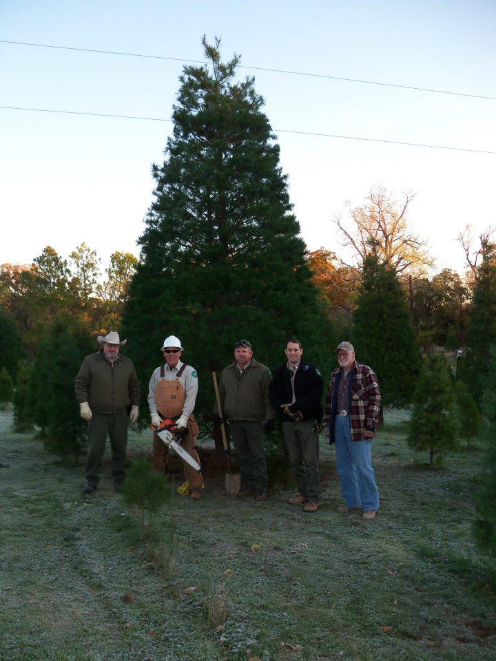 Members of Texas Parks and Wildlife get ready to transport this 20 foot pine to the State Capitol building.