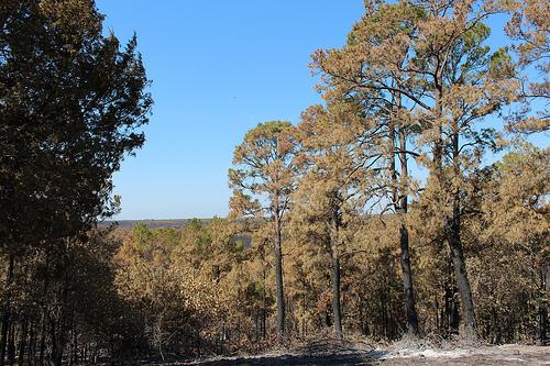 Bastrop State Park wildfire damage. Photo by Mose Buchele, KUT News/