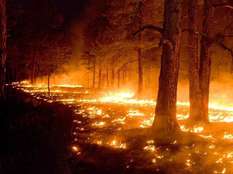 Fires at the White Water Baldy Complex in New Mexico on June 6th, 2012.