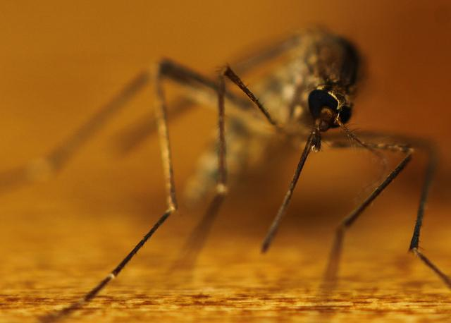 Another death from the mosquito-carried West Nile virus has been reported in Travis County.