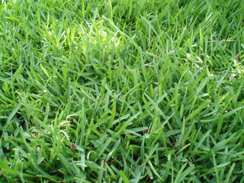 Austin Water says some types of grass and plants require more moisture than is typical in Texas.
