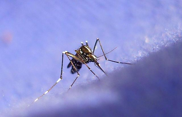 Officials say some mosquitoes in Central Texas are carrying West Nile virus.