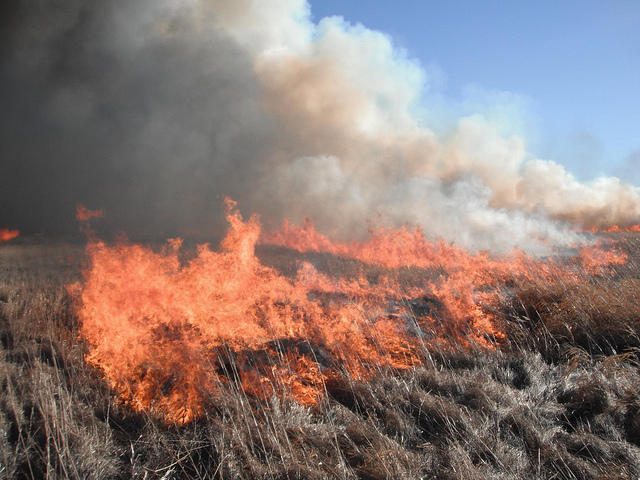 The City of Austin says prescribed fire a cost effective way to clear vegetation.