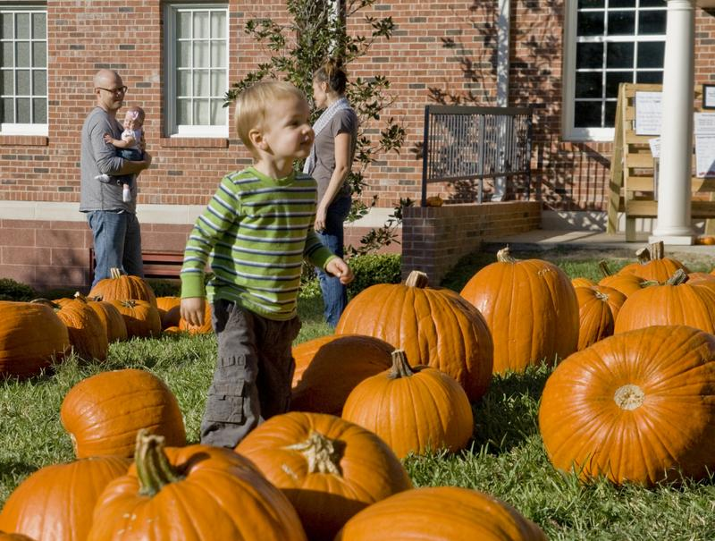 J.D. Patton and his family search for the perfect pumpkin at Tarrytown United Methodist Church. The patch has supplied Austinites with pumpkins since 1946.