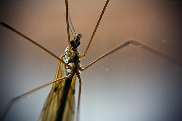 Mosquito activity may finally be slowing down across Central Texas.