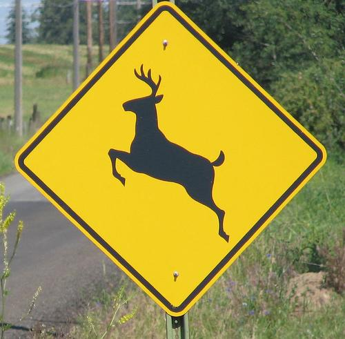Watch out drivers: It's deer mating season, and the ornery animals' thoughts aren't with traffic safety.