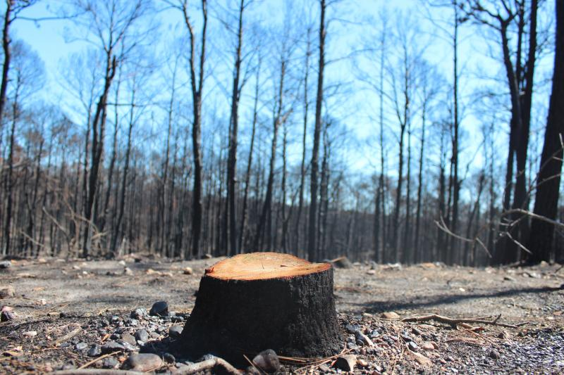 The Bastrop wildfire in 2011 scorched more than 32,000 aces.