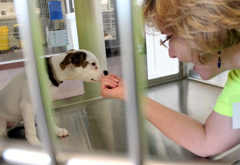 An Austin Animal Center worker cajoles a wayward dog. The center finished 2012 with its no-kill standing intact.