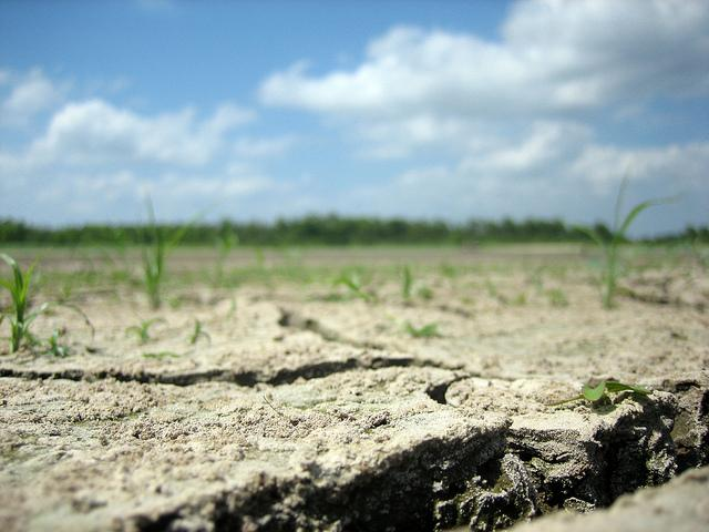 The effects of drought caused a rise in grocery prices this year, as Texas and other agriculture producing states grapple with dry farming and ranching conditions.