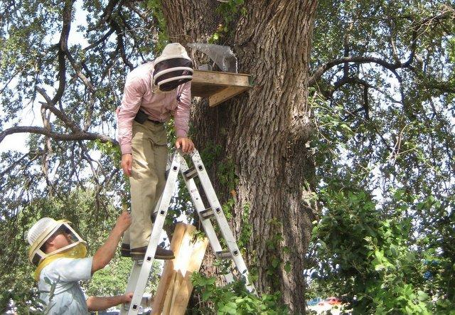 Randy Oakley and Samuel Oakley set up a one-way trap and a decoy beehive to lure out more than 30,000 honeybees.