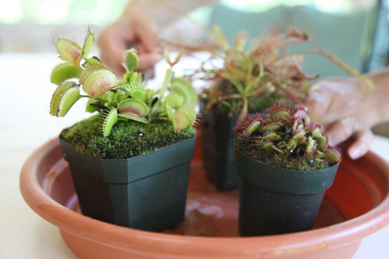 Carnivorous plants like flytraps get nutrition from insects, not soil.