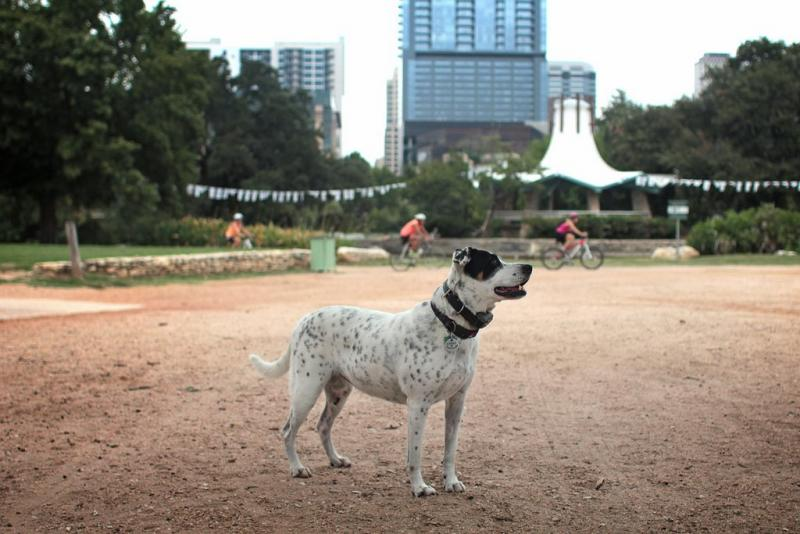 One of regular trail user Marc Morrison's three dogs. Morrison opposes changes to Auditorium Shores that would close part of the area to dogs.