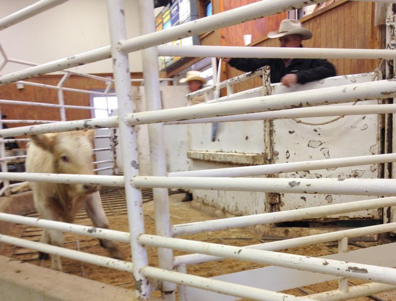 At a cattle auction in Bastrop, Texas ranchers encouraged California ranchers to hold onto their livestock despite the state's devastating drought.