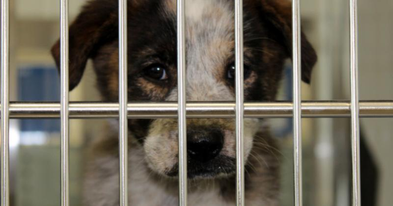 """A visitor to the Austin Animal Center in 2011. Animal advocates worry a law requiring a """"veterinarian-client patient relationship"""" could slow rescue efforts, leading to more animal deaths."""