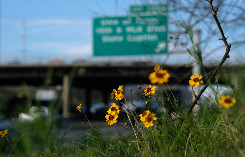 Wildflowers on the side of I-35 near downtown Austin on Thursday.