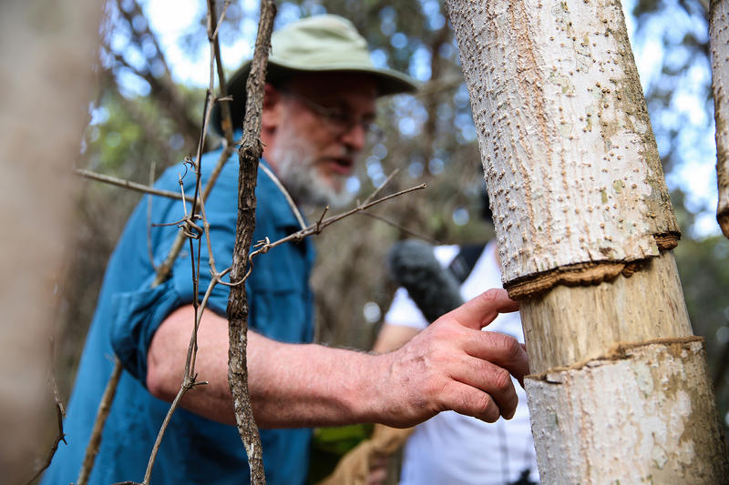 Volunteer Cliff Tyllick helps identify invasive and remove invasive species at Walnut Creek Park in February 2017.