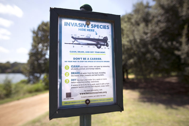 Zebra mussels, an invasive species that can destroy ecosystems, are headed to Austin waterways.