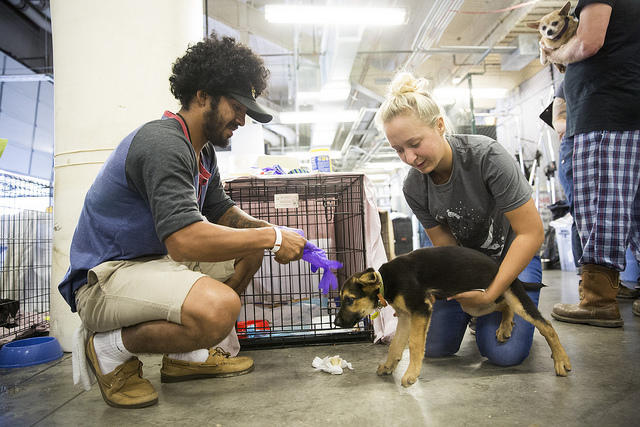 Brandon Olivarez and Tesa Rutherford tend to Harvey, a puppy they found cowering in their backyard in Rockport after the storm, at the Delco Center in Austin.