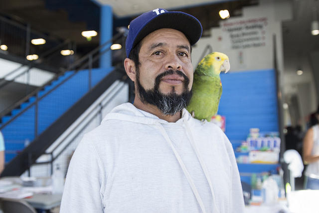 Jose Guerrero walks around with his parrot at the Delco Center for Harvey evacuees in Austin.