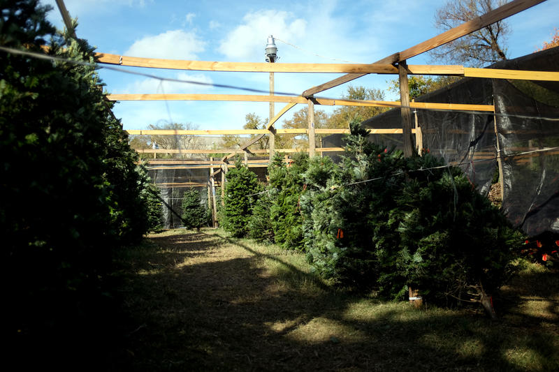 Two weeks after Thanksgiving, South Austin Optimist had already sold out of its inventory of 340 trees.