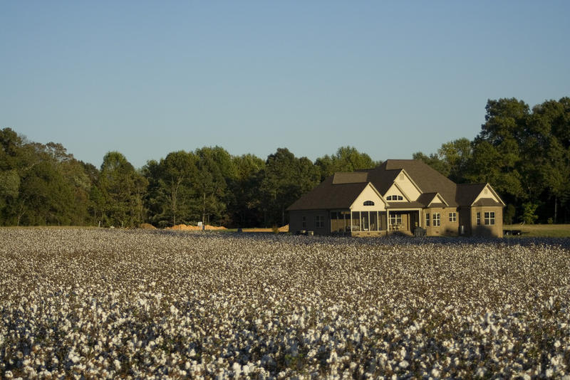 Texas farmers want Congress to include cotton support in the disaster relief package, but critics say it belongs in a farm bill instead.