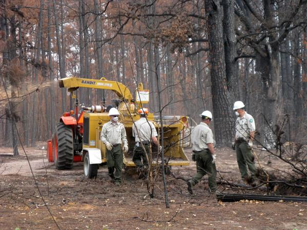 Crews chipping burnt wood inside Bastrop State Park.