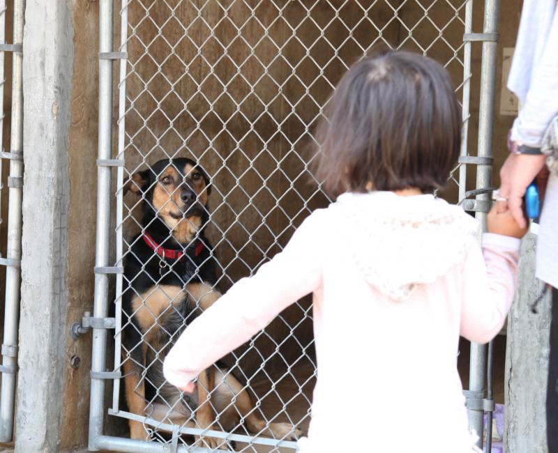 The Austin Animal Shelter has approximately 23 dogs on the euthanize list if at least 40 pets are not adopted today.