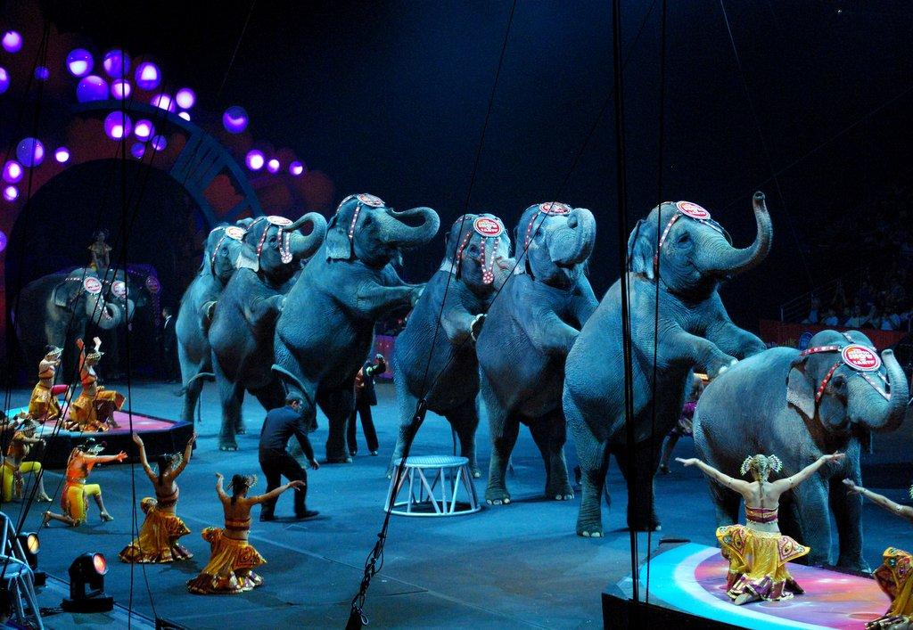 Austin Commission Considers Ban On 39 Painful 39 Circus Animal