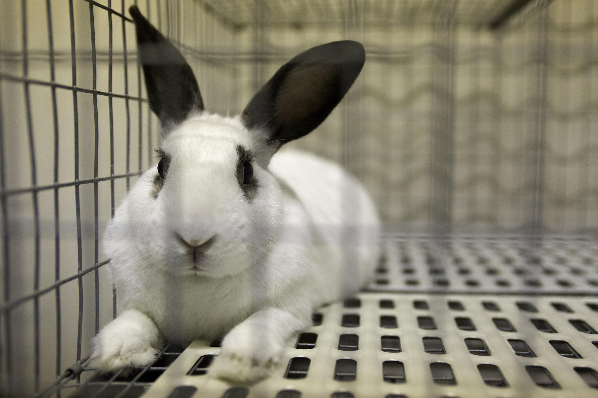 animal shelters urge people not to buy live bunnies for easter kut