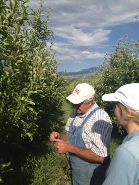 Glenn Austin shows Kirsten Howard how he grafts apple trees to create the perfect fruit