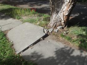 A damaged portion of a Paonia sidewalk