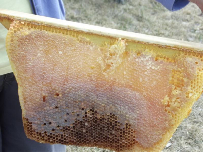 This comb was created free-form by the bees and the cells are a variety of sizes.