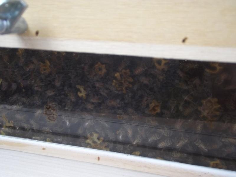 Inside the hive, you can view the activities of the busy bees.